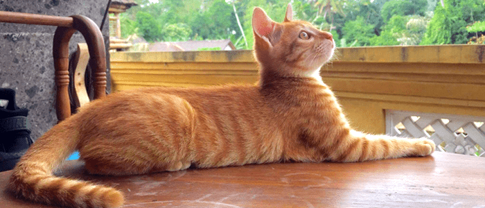 [Cats & Copy] The Best Copywriting Tips I Learned By Mothering A Stray Cat In Bali